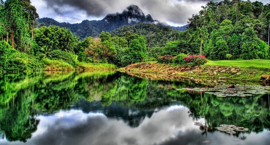 Malaysian Rainforest Nature's Pollution Free Oasis